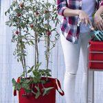 Sac de culture, sac potager Veggie Bag, Tomates, fraises...couleur rouge. 35x36 cm. de la marque Botanyland image 3 produit