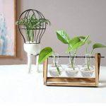 SODIAL Terrarium de Plante avec Vase en verre pour la decoration de la maison, Recipient de radis vert(3 terrariums) de la marque SODIAL image 2 produit