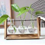 SODIAL Terrarium de Plante avec Vase en verre pour la decoration de la maison, Recipient de radis vert(3 terrariums) de la marque SODIAL image 3 produit