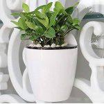 Sungmor jardinage 3pièces Creative Pot de fleurs à suspendre, Pot de fleurs d'arrosage automatique, support mural pour plantes W/Long temps Fonction de stockage de l'eau Small (13.7cm*10.7cm) de la marque Sungmor image 1 produit