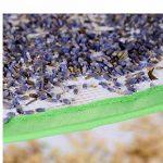 Suspendue Filet de Séchage 8 étagères Pliable à Linge pour Camping Rangement Portable Pique-nique Camping Pêche Voyager Noir de la marque Paladin NLH image 4 produit