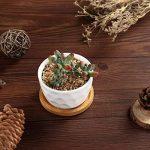 T4U 8CM Pot de Fleurs Rond en Céramique Blanc /Pots de Fleurs de Plante / Récipient avec Plateau en Bambou - Paquet de 6 de la marque T4U image 2 produit