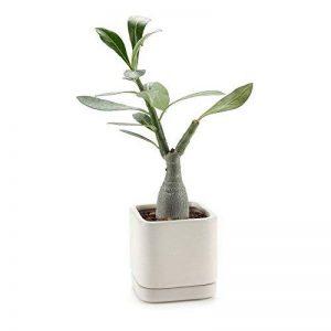 T4U Carré Camée marron série Céramique Pot Plante Récipient Pépinière Pots Succulents Cactus Plante pots de la marque T4U image 0 produit