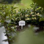 étiquette pour plantation TOP 1 image 2 produit