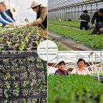 étiquette pour plantation TOP 10 image 4 produit