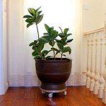 ZHEN GUO Grand chariot de plante de FRP, chariot rond de support d'usine avec 8 roues de roulette de catégorie industrielle et bord en aluminium, parfait pour déplacer des plantes en pot ( Couleur : Blanc , taille : 67cm ) de la marque ZHEN GUO image 1 produit